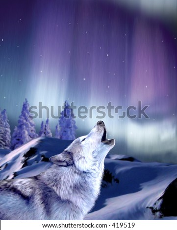 Wolf howling - stock photo