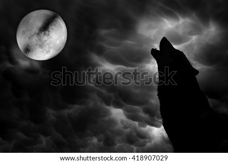 Wolf howling at moon - stock photo