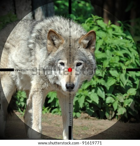 Wolf in forest - stock photo