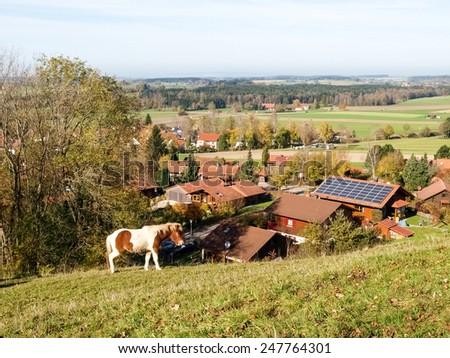 Wolfegg, Germany: horses grazing on the hill