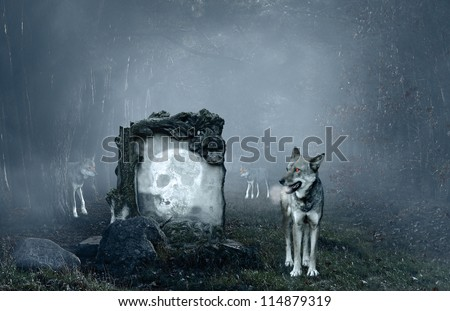 Wolves guarding an old grave in a dark forest - stock photo