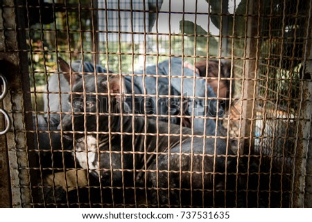 Woman and dogs in the cage, Human trafficking concept,Blurry portrait