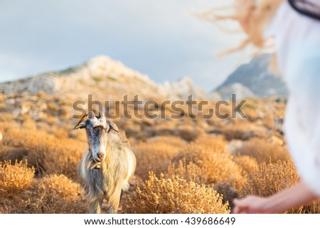 Woman and domestic goat in mountains on Greek Mediterranean island Crete. Dramatic warm light and weather before the sunset. - stock photo