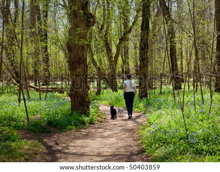 Woman and two dogs walking among newly growing blue bells in forest