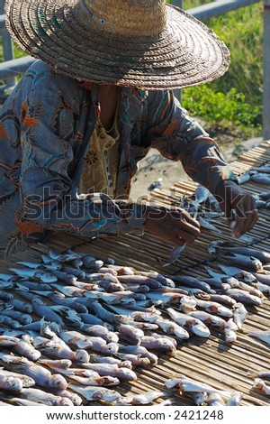 Woman arranging and drying seasoned fish. - stock photo