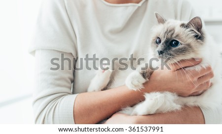Woman at home holding her lovely birman cat, room interior on background, pets and lifestyle concept - stock photo