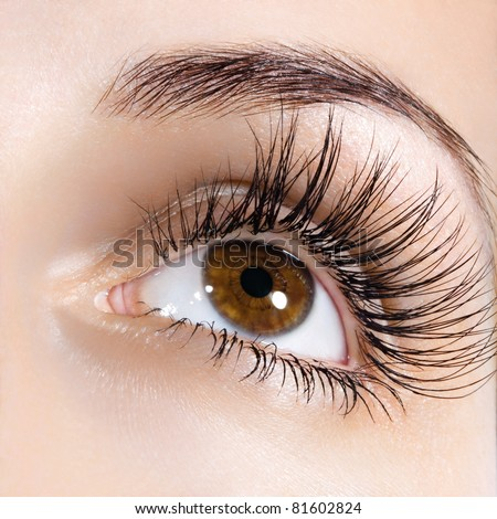 Woman brown eye with extremely long eyelashes - stock photo