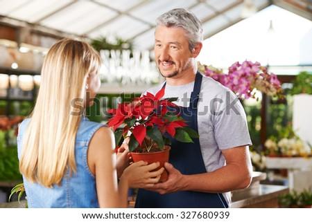 Woman buying pot of poinsettia in nursery of a garden center - stock photo