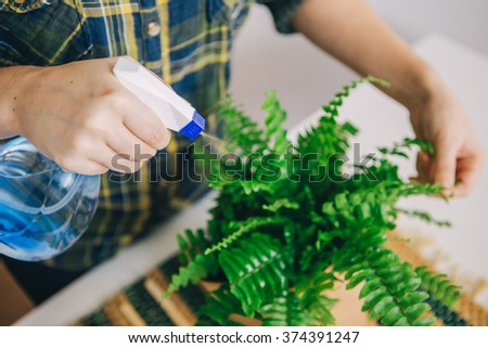 Woman caring for house plant nefrolepis.