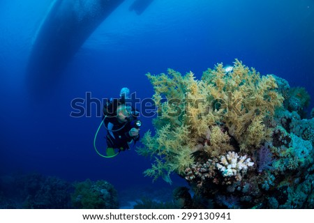 Woman diver under the boat, Ruqia Island, Red Sea, Egypt