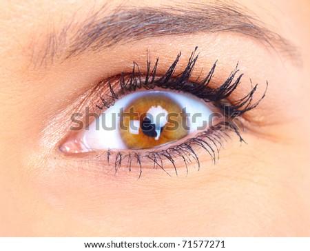 woman eye. Close up, macro - stock photo