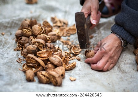 Woman farmer crushing walnuts with a hammer outdoor