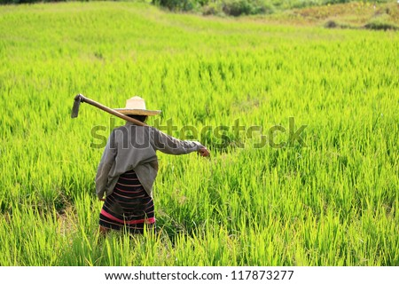 Woman farmer holding spade at terraced rice field in Chiang Mai, Thailand