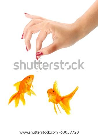 Woman feeding goldfishes isolated on a white background - stock photo