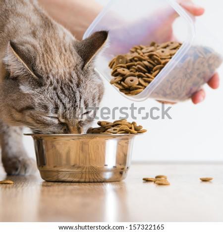 Woman feeding hungry pet cat - stock photo