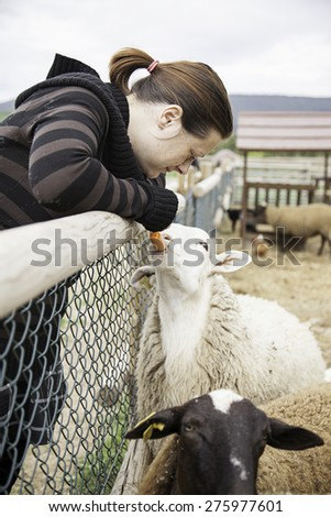 Woman feeding sheep rural farm animals - stock photo