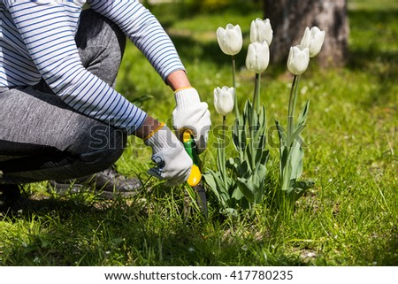 Woman gardener working with gardening scissors in the yard - stock photo