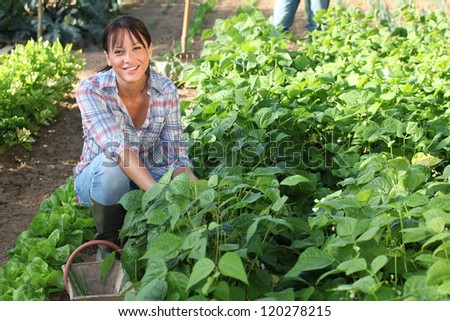 Woman gardening - stock photo