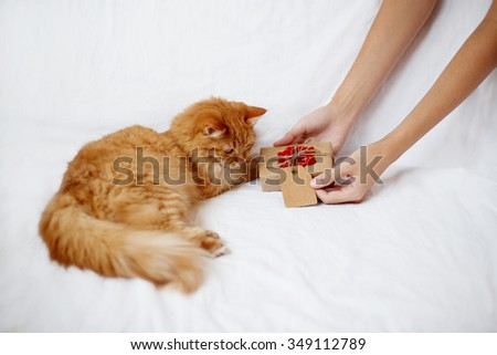 Woman gives her furry pet a christmas present. Ginger cat looks curiously at a gift in craft paper with crocheted red snowflake. - stock photo