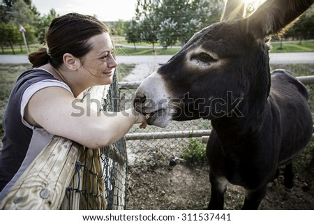 Woman giving eat donkey farm, animals and nature - stock photo