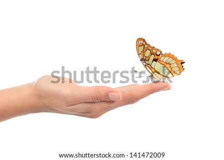 Woman hand holding a beautiful butterfly isolated on a white background - stock photo