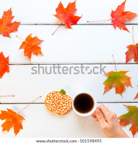 Woman hand holding cup of coffee on white wooden background with autumn maple leaves and pumpkin cookie.  Top view, square.