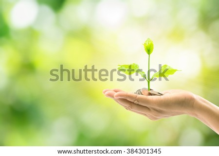 woman hand holding plant growing on coin isolated on green background,save money for prepare in the future,finance and money concept - stock photo