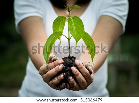 Woman hand holding  young tree in soil for prepare plant on ground,save world concept - stock photo