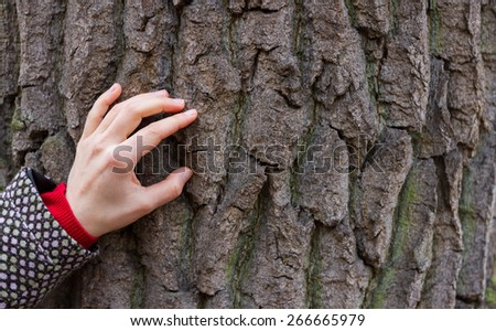 Woman hand is touching old oak tree bark. Image can be used as concept of connection with nature, relaxation, energy replenishment etc. - stock photo