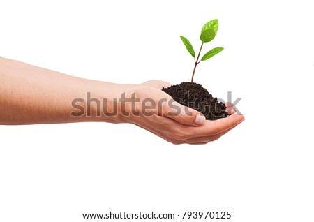 Woman hand isolated and  seedling on white background