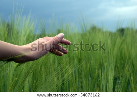 woman hand over green wheat - stock photo