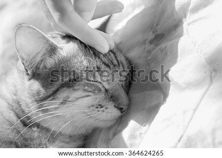 woman hand petting a cat head, love to animals - stock photo