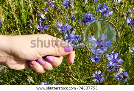 Woman hand polished nails hold magnifying glass zoom blue flower ring. Closeup of nature background. - stock photo