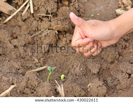 Woman hand show thumb up for Young pumpkin tree