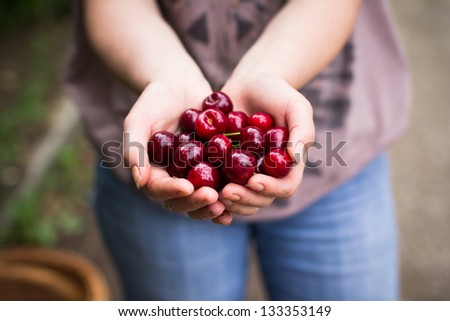 Woman hand showing fresh delicious cherry - stock photo