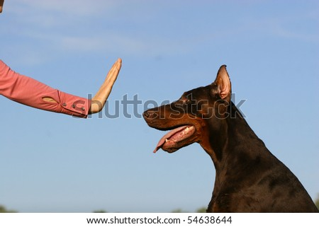 Woman hand showing the stop simbol for dog - stock photo