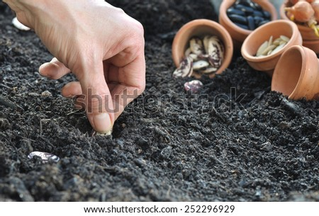 woman hand sowing seeds in vegetable garden soil  - stock photo