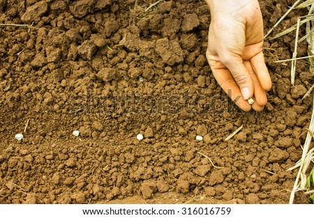 Woman Hand Sowing Seeds into the Soil