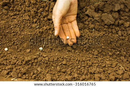 Woman Hand Sowing Seeds into the Soil - stock photo