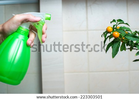 Woman hand spraying christmas cherry in the kitchen - stock photo