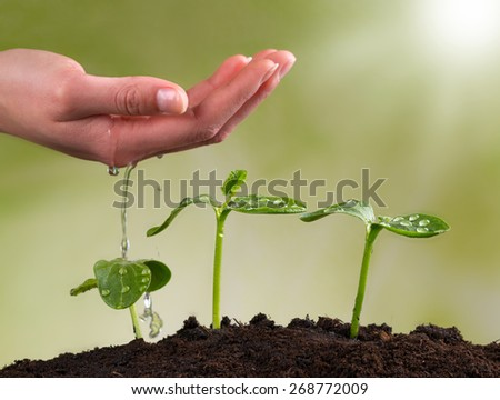 Woman hand watering young plants in pile of soil - stock photo
