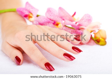 Woman hand with pink orchid - stock photo
