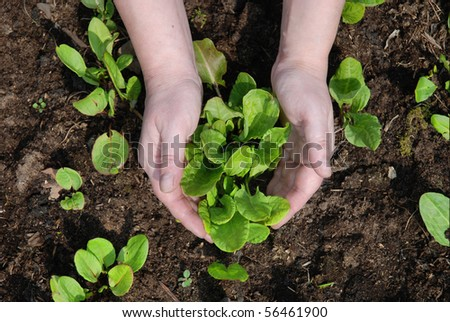 woman hands care about small seeds