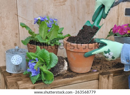 woman hands gloved proceeding to fill flower pot with potting soil - stock photo