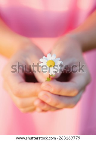 Woman hands holding a beautiful daisy with pink blurred background - stock photo