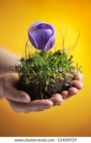 woman hands holding a piece of groung with purple flower