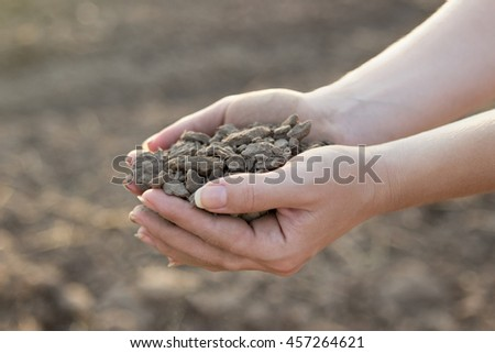Woman hands holding dry pieces of soil