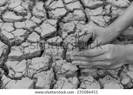 Woman hands holding flower growing on cracked earth background - stock photo