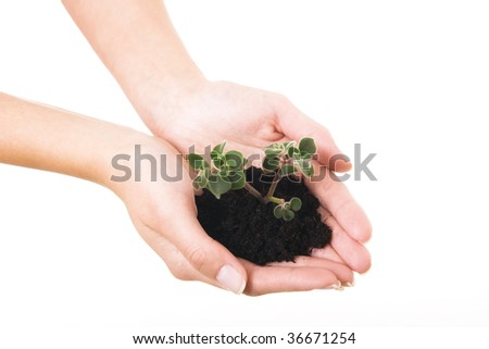 Woman hands holding young plant. Take care concept.