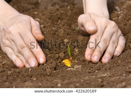 woman hands planting gladiolus bulb - stock photo